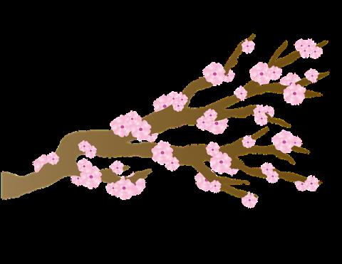 Karate beimJapanfest 2019 München - Kirschblüte